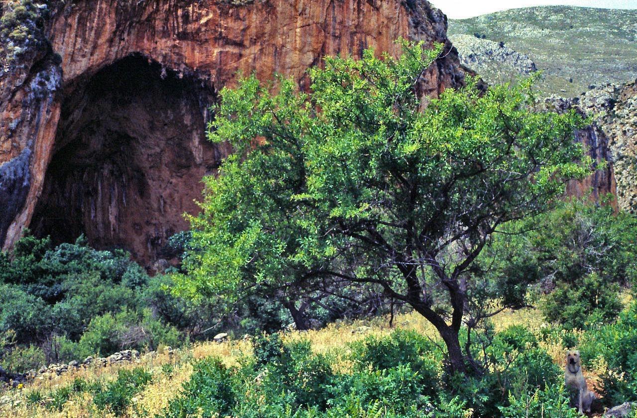Grotta preisotorica dell'Uzzo